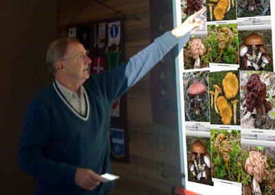 sieniluennoitsija